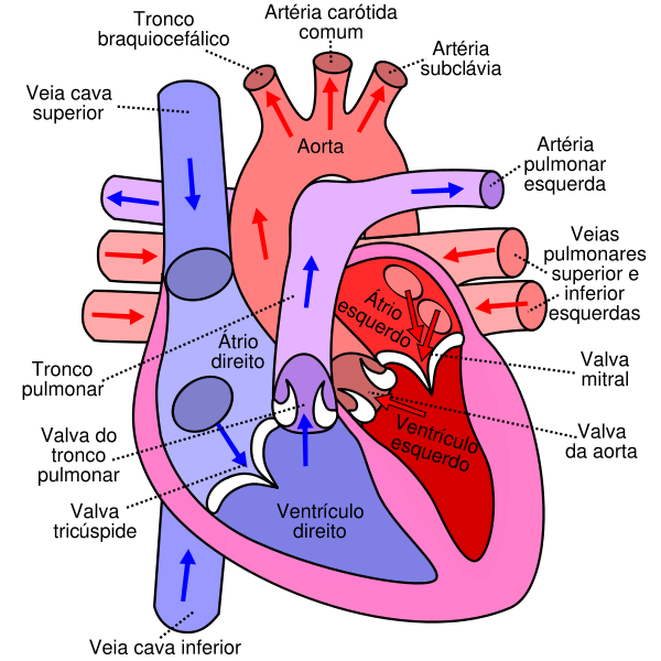 """the features of the human heart 4532 quotes have been tagged as heart:  """"i could hear my heart beating i could hear everyone's heart i could hear the human noise we sat there making,."""
