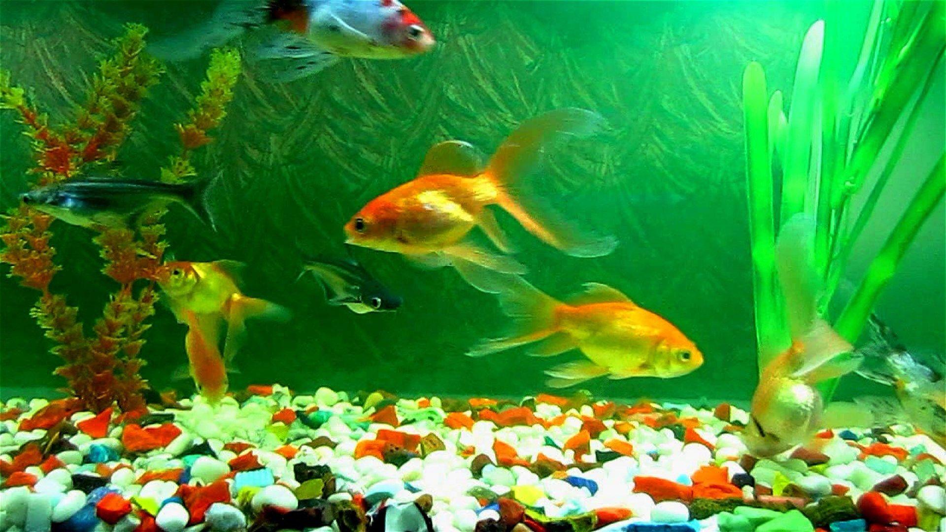 aquarium fish tank wallpaper hd 1080p | ololoshenka | Fish ...