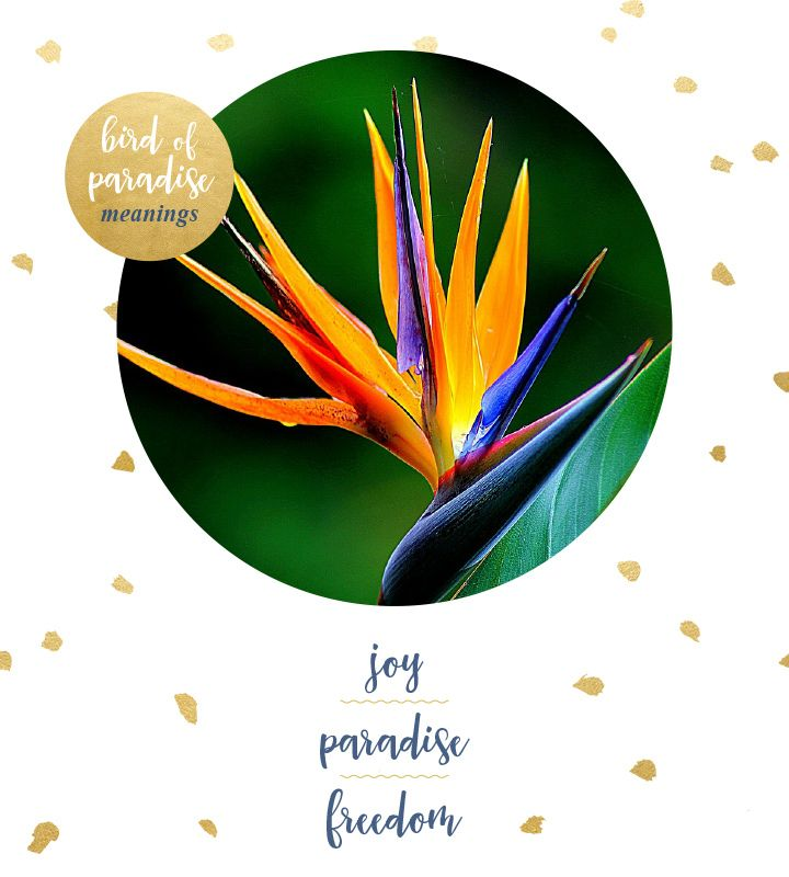 Bird Of Paradise Meaning And Symbolism Ftd Com Birds Of Paradise Flower Flower Quotes Paradise Meaning