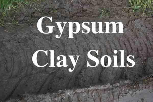Gypsum And Clay Soils Clay Soil Soil Planting Flowers