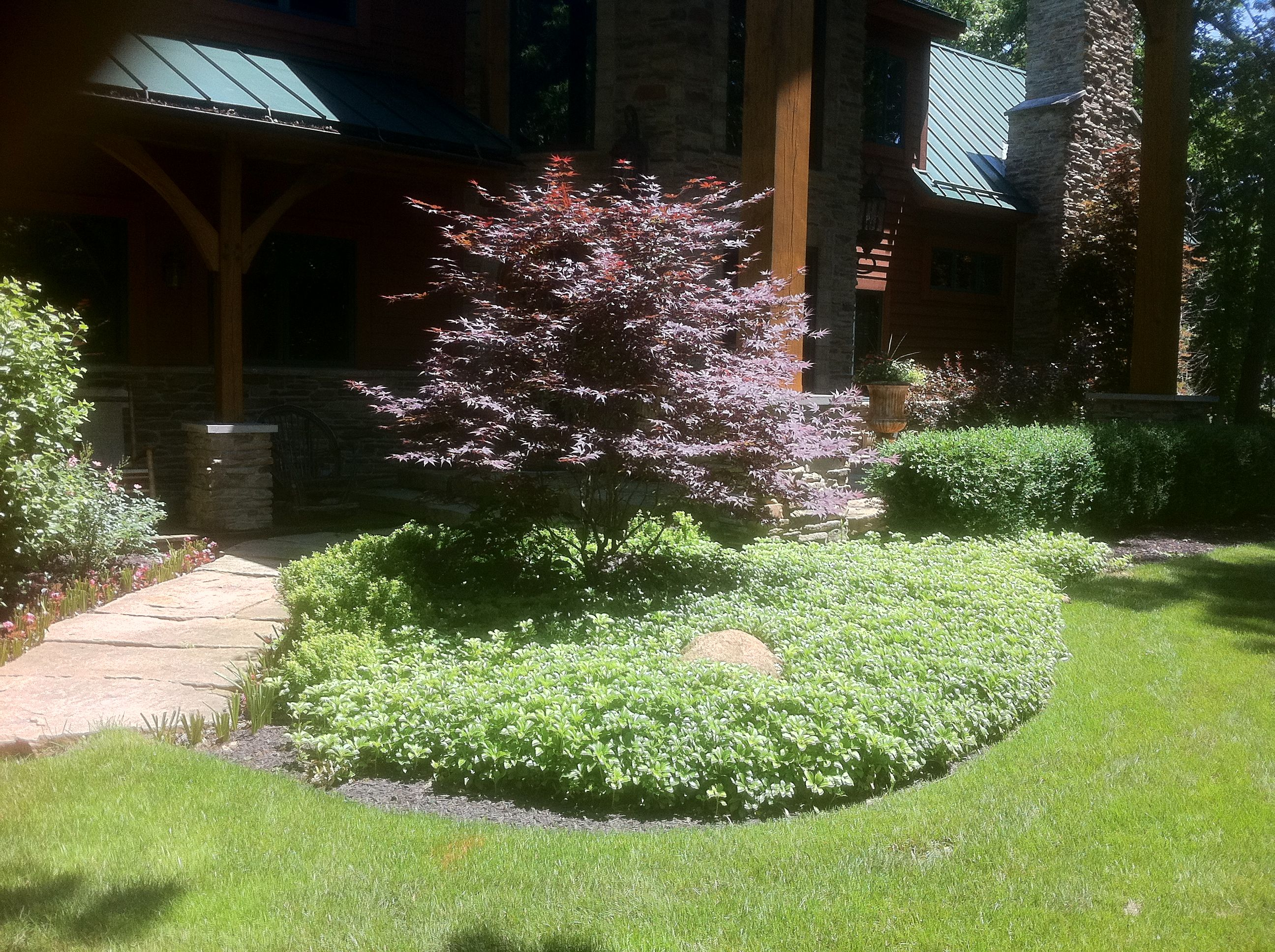 Japanese maple tree with pachasandra ground cover planted for Japanese planting ideas