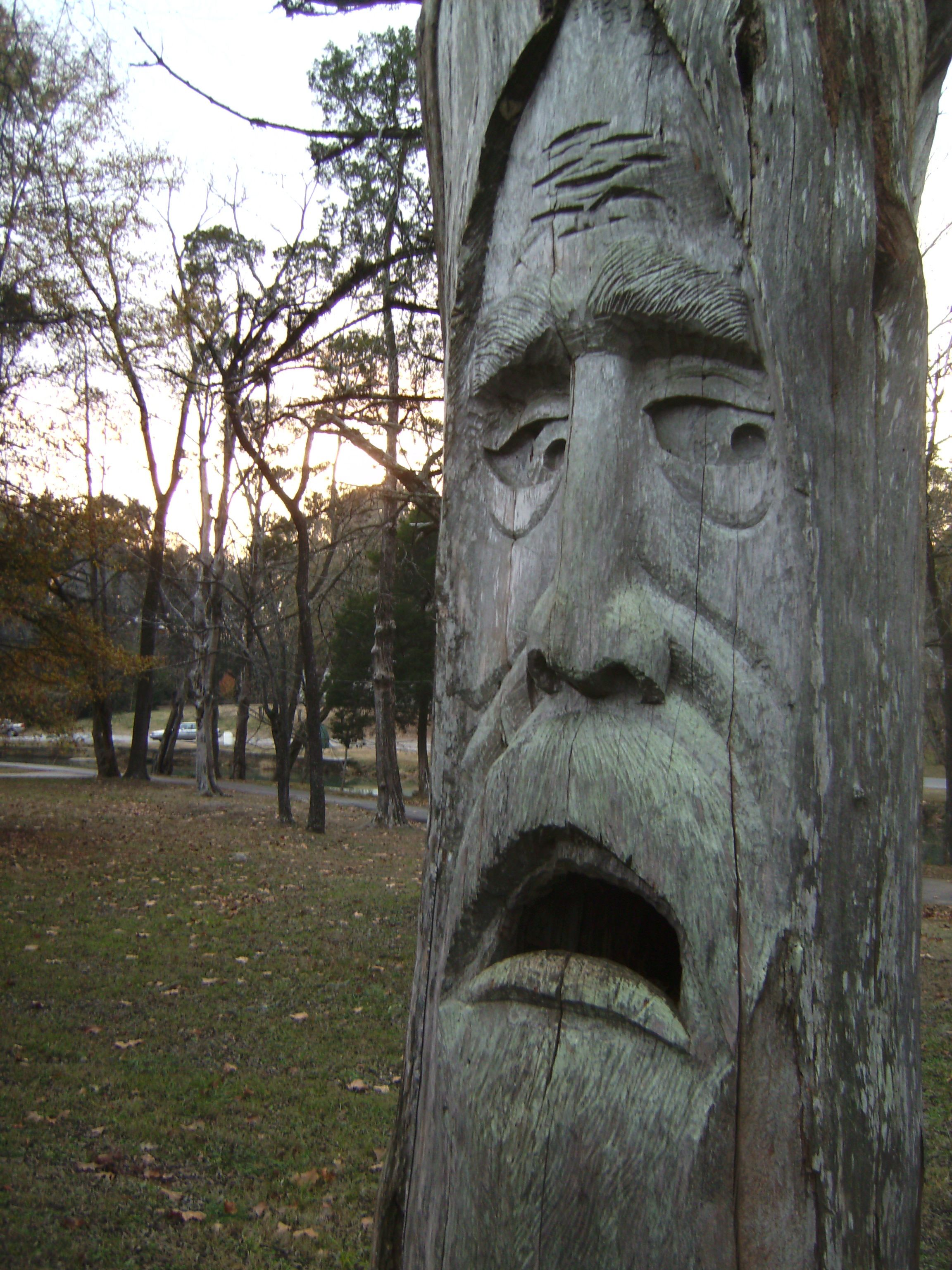 An old mans face carved into a tree at orr park in