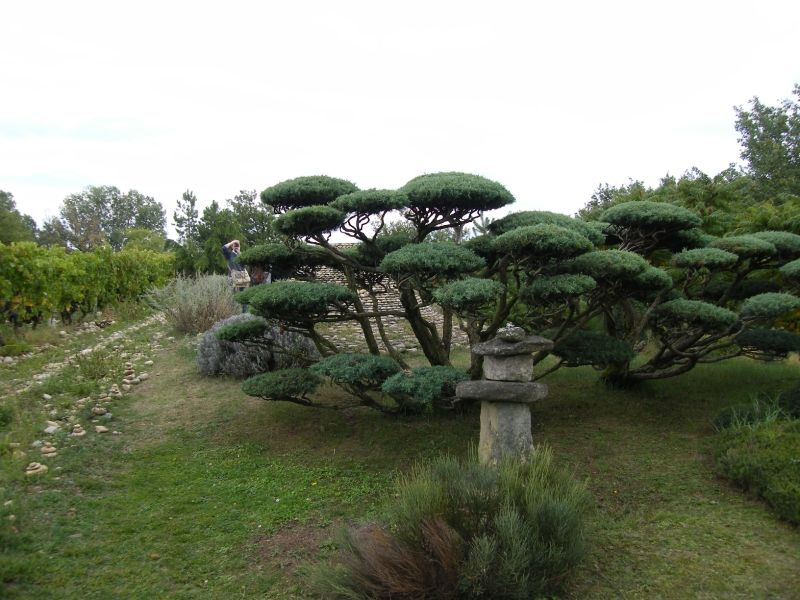 Dscf1258 Amenagement Jardin Amenagement Paysager Jardin Zen