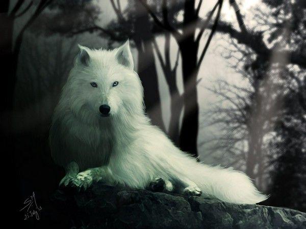 Ghost Direwolf Wallpaper X3cbx3edire Wolfx3cbx3e