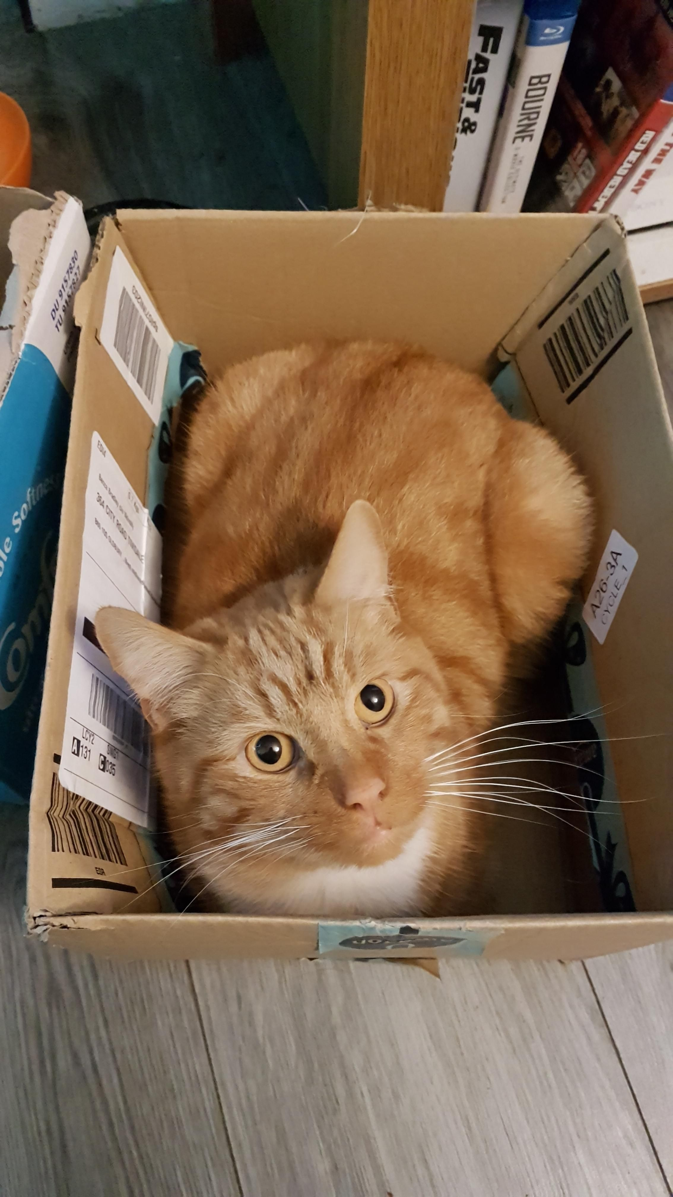 Mccree In A Box Orange Tabby Cats Tabby Cat Cats