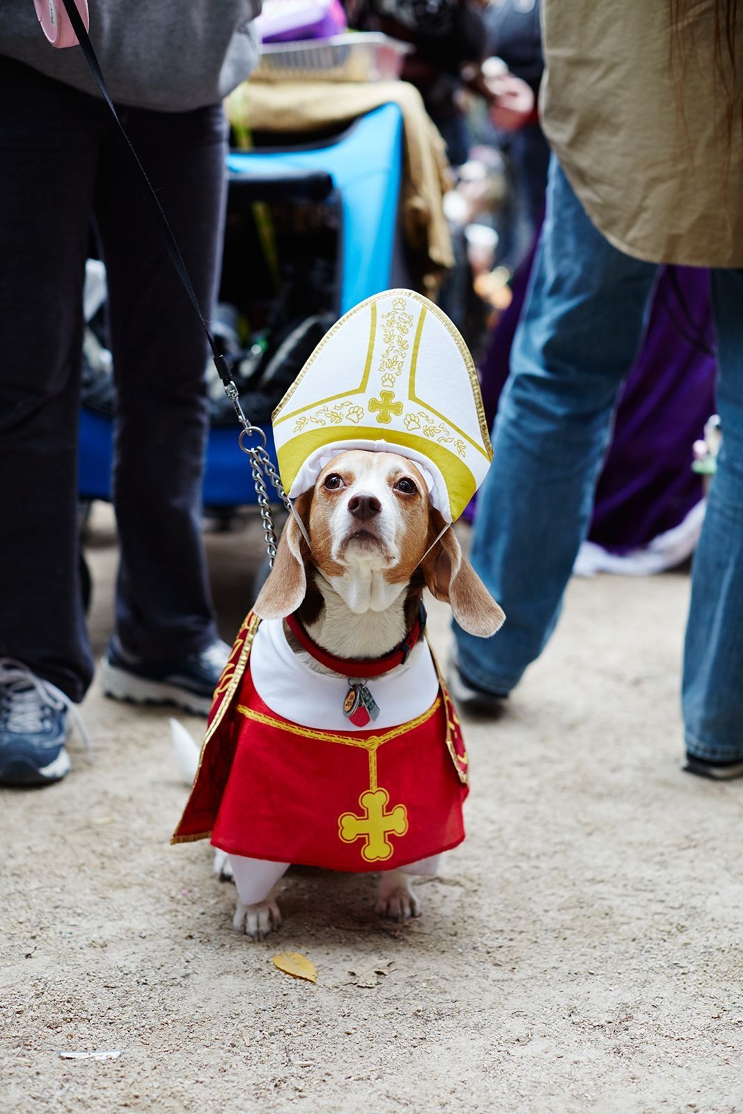 The 40+ Best Dog Costumes EVER #refinery29 //.refinery29.com/2015/10/96371/new-york-dog-parade-pictures#slide-20 Doing the Pope proud. & The 40+ Best Dog Costumes EVER | Dog Pet costumes and Dog halloween
