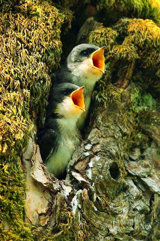 Mummy !!!!!!!!I'm hungryyyyyyyyyyyy