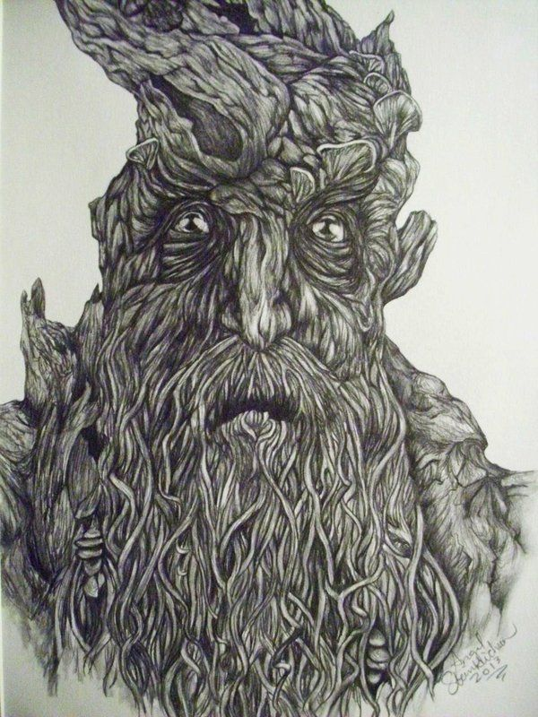lord of the rings treebeard drawing lord of the rings