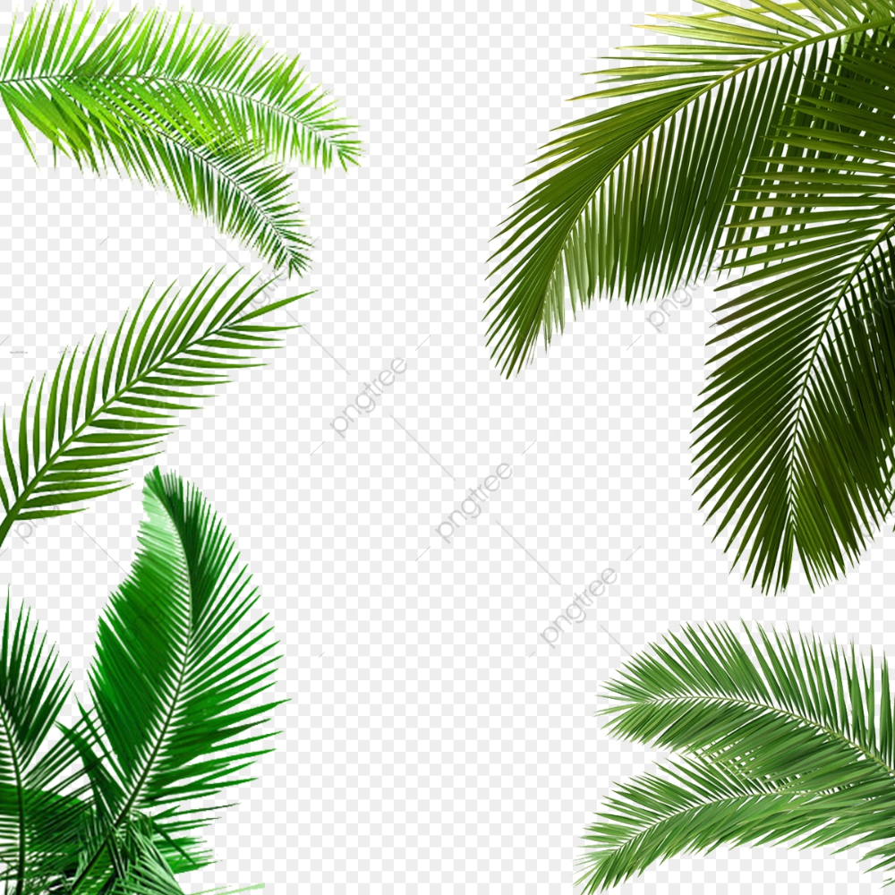 Palm Leaf Palm Leaf Clipart Leaf Clipart Png Transparent Clipart Image And Psd File For Free Download Leaf Clipart Leaves Palm Leaves