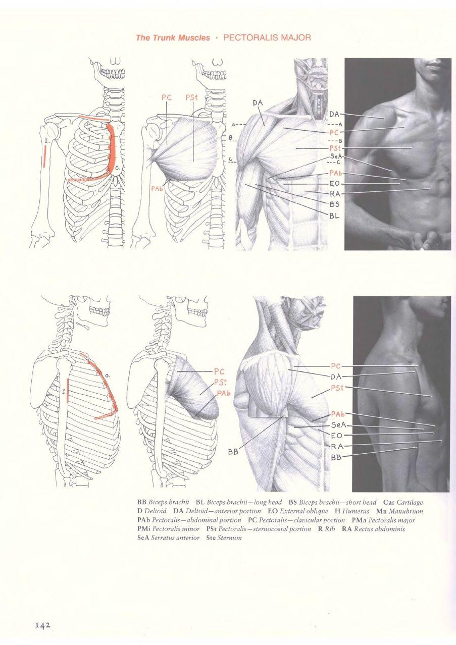 Eliot goldfinger human anatomy for artists human