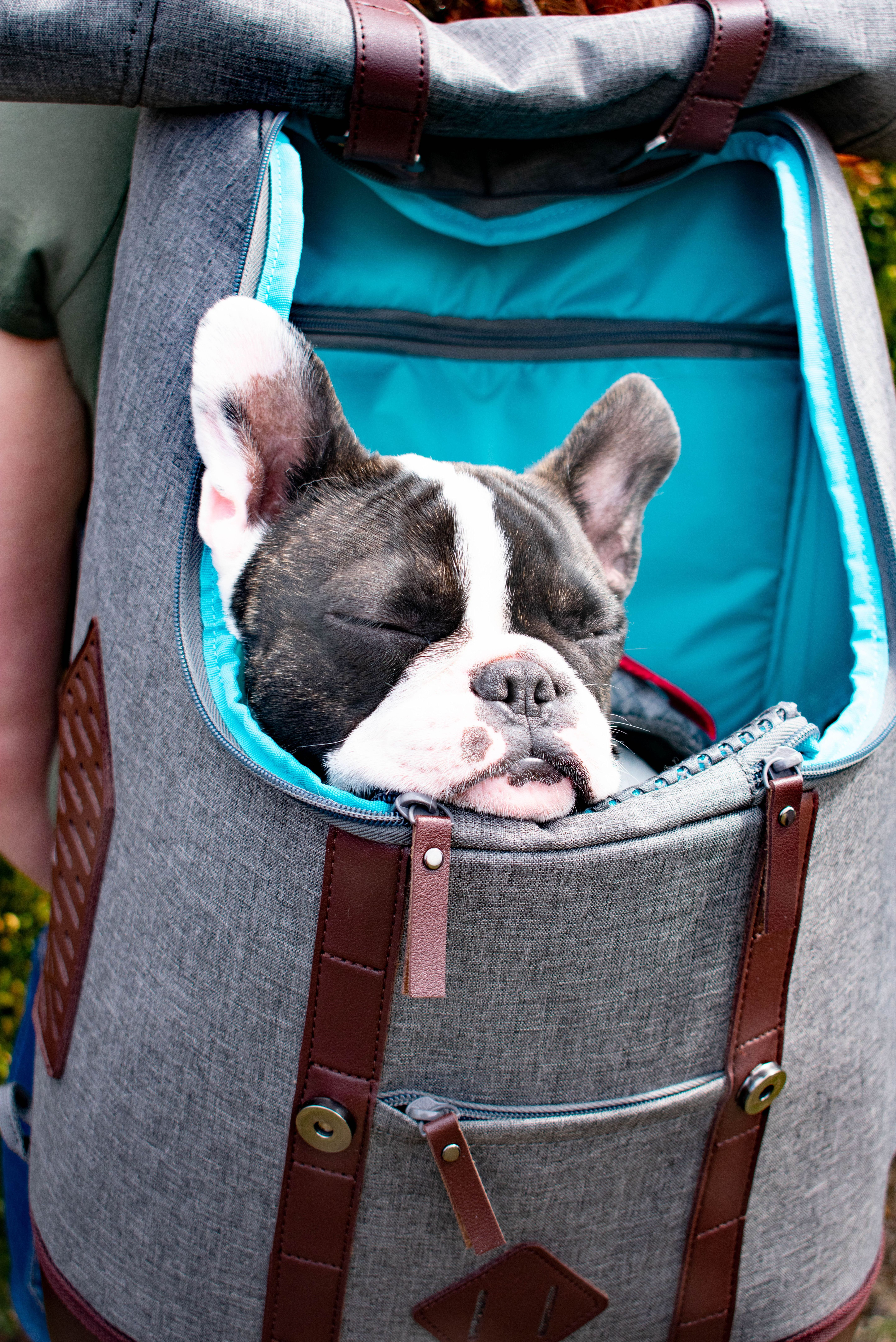Did You Know That The K9 Rucksack Is Perfect For Taking A Little