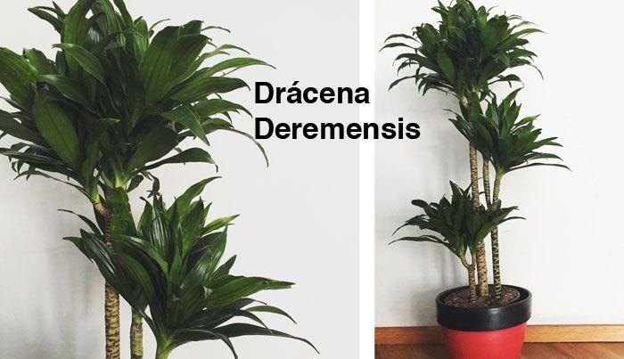 Plantas de interior s per f ciles y agradecidas de cuidar Plantas tropicales interior
