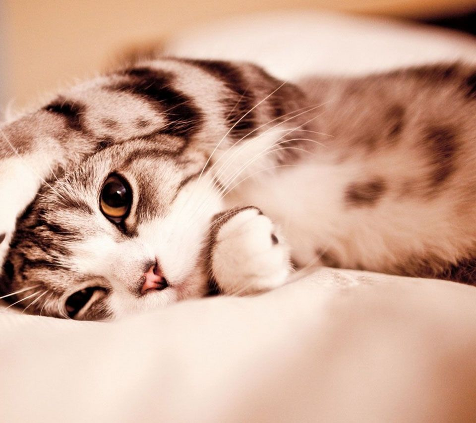 Awesome にゃんにゃんにゃん Androidスマホ壁紙 かわいい子猫