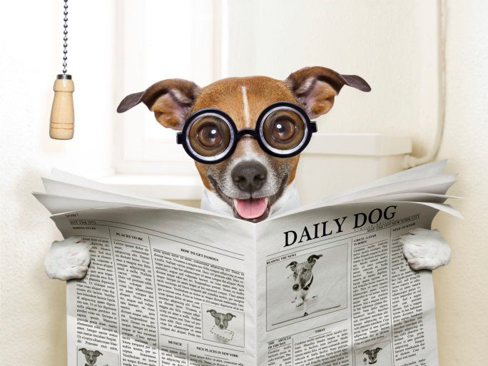 The Scoop on Poop: What You Can Tell about a Dog by his Doodie - The Dogington Post