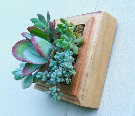 Succulent Living Wall Art, Vertical Succulent Planter, Succulent Wall  Garden, Redwood Wall Planter