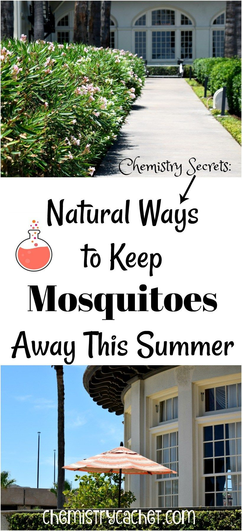 Chemistry Secrets: Natural Ways to Keep Mosquitoes Away ...