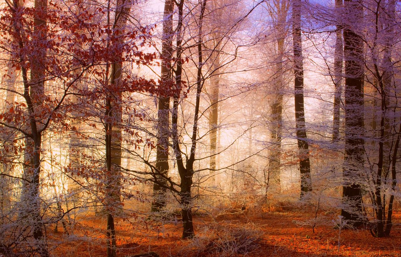 Forest, Forest, Nature, Landscape, Winters forest,