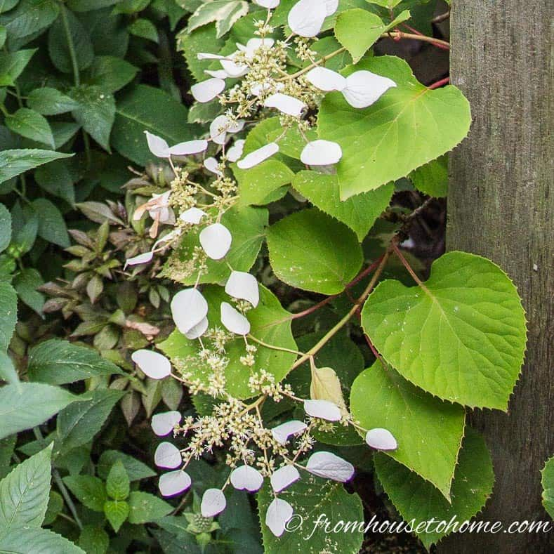 House Plants For Shady Rooms: Secret Garden Design Ideas: How To Create Your Own Garden