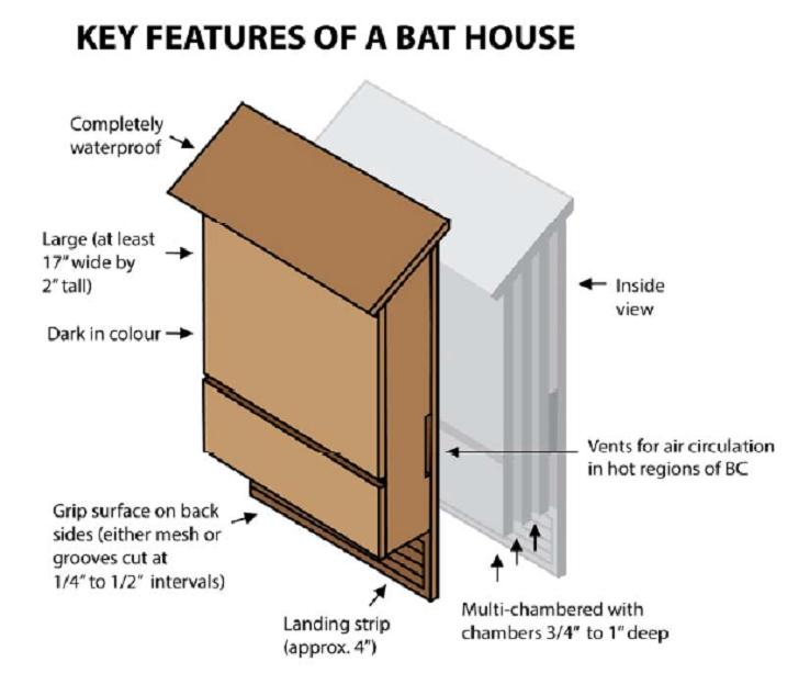 Pin On Going Batty