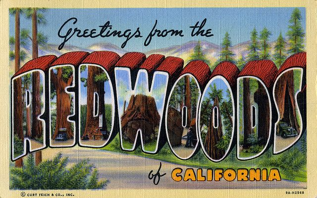 Greetings from the redwoods of california large letter postcard greetings from the redwoods of california large letter postcard by shook photos via flickr m4hsunfo Gallery