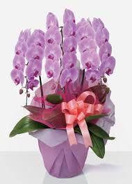 Rezultate imazhesh për orkide