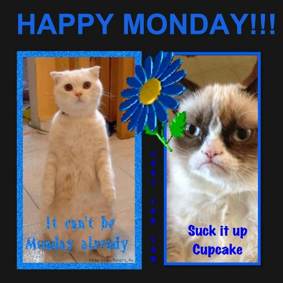 Monday Grumpy cat meme, Cat memes, Grumpy cat