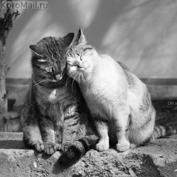 правда, кошка любит тебя картинки другую информация