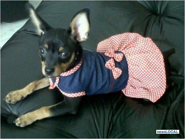 Ropa Para Perros Pincher Buscar Con Google Ropa Para Perros Perro Pincher Perros