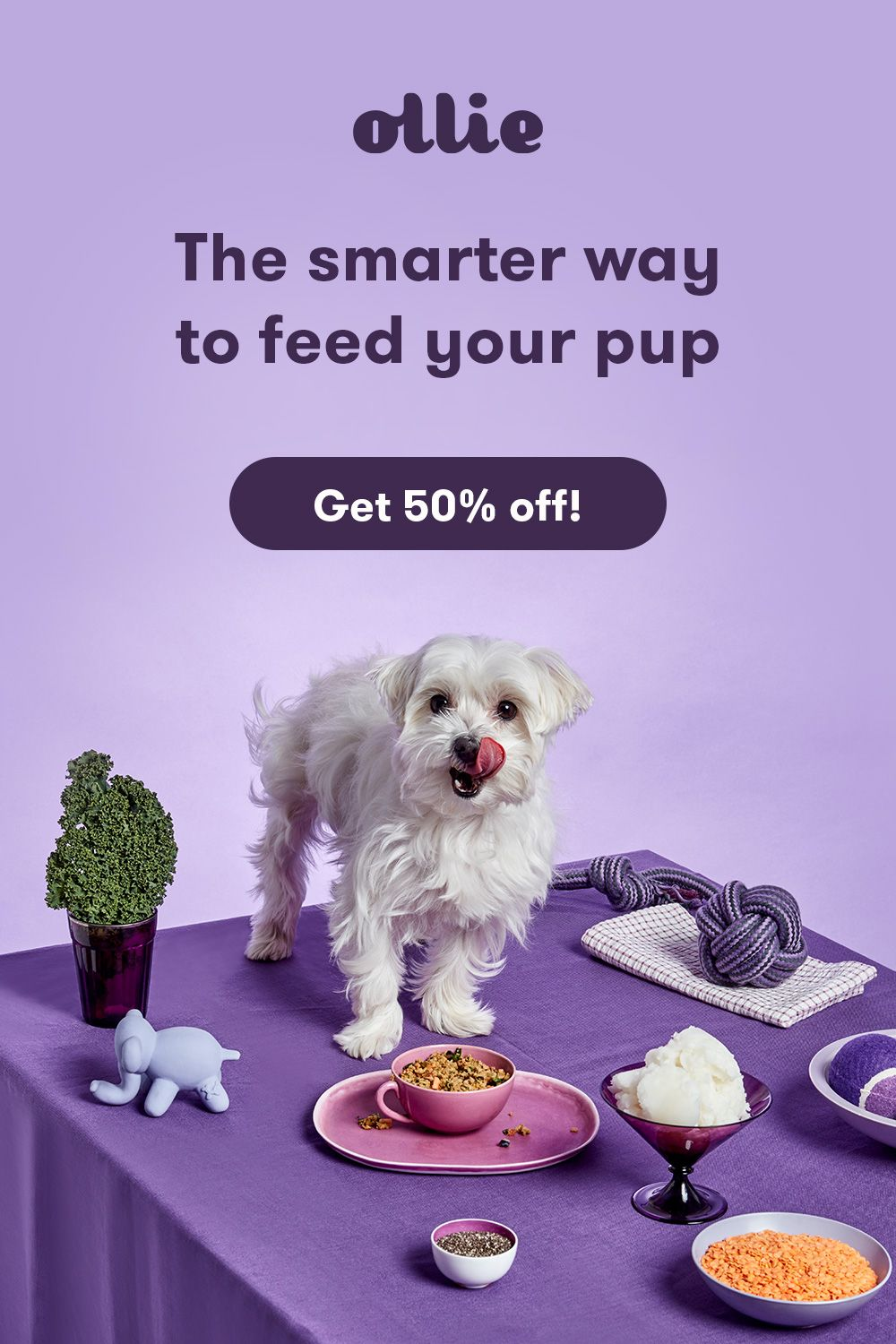 Meet Ollie Freshly Made Human Grade Dog Food Customized To Your
