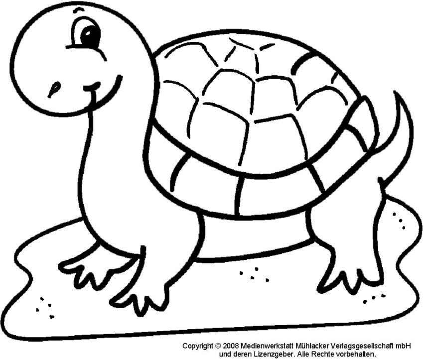 ausmalbilder schildkröte