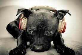 escuchar musica - Buscar con Google