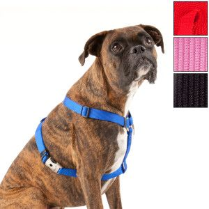 Null Dog Harness Dogs Boxer Baby