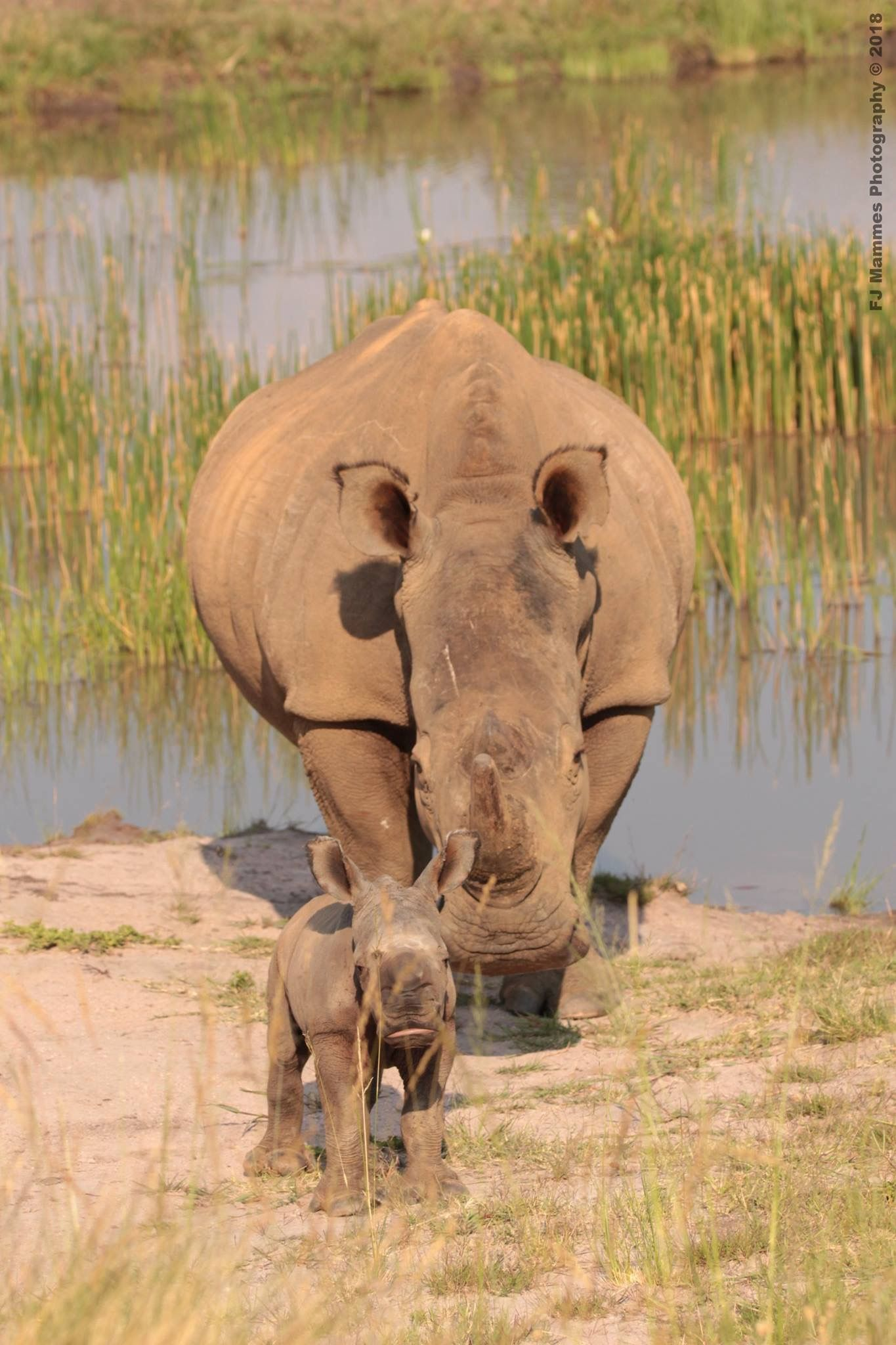 Pin by Claire Hénault on Rhino's   Big animals, Animals ...