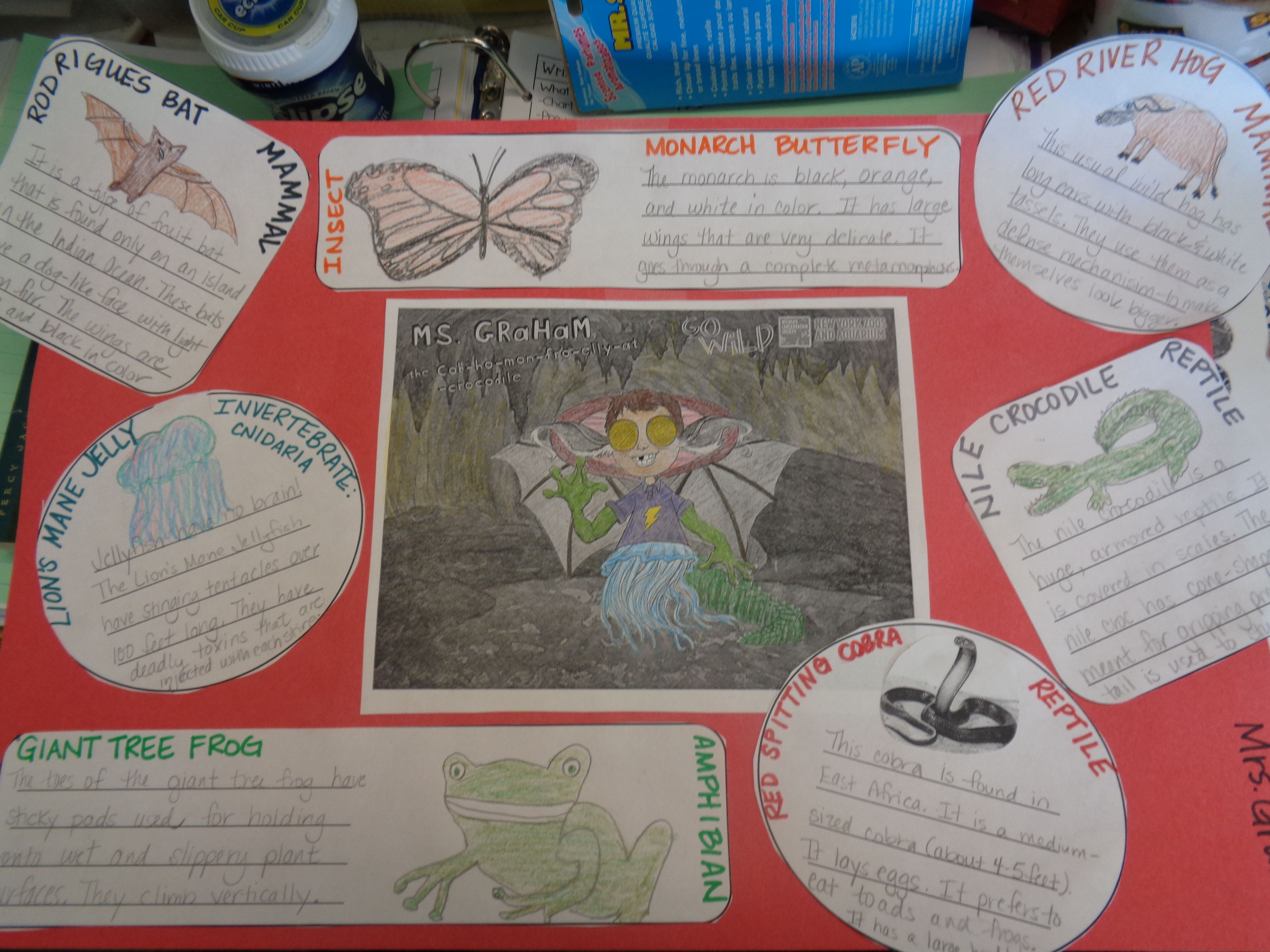 My Wild Self Project Animal Classifications Introduction Animal Life Cycles Animal Classification Build Your Wild Self