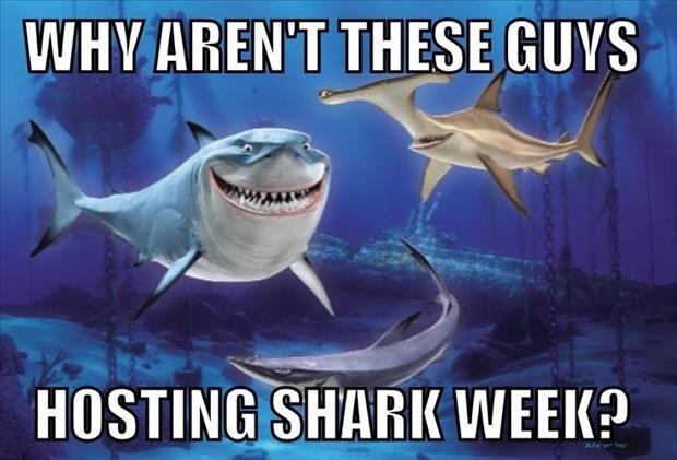 Más De 25 Ideas Increíbles Sobre Chistes De Tiburones En