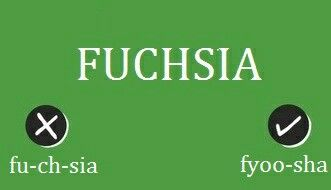 Fuchsia Is A Pink Purple Flower It Is Pronounced As Fyoosha More Like Few Sha It Is W English Phrases English Pronunciation Learning Pronunciation English