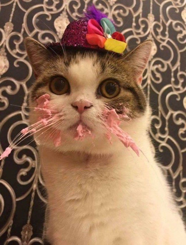Cat Eating Cake On His Birthday Is Adorable - We Love Cats and Kittens