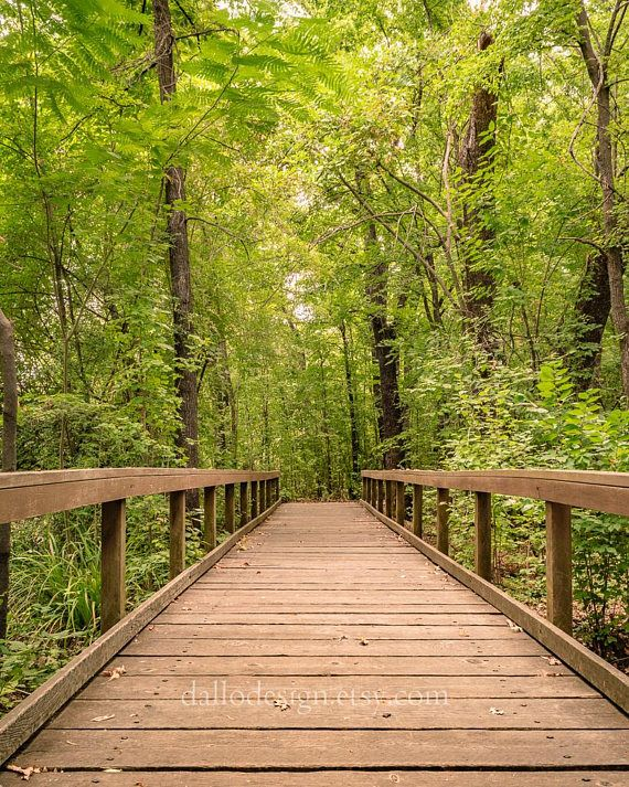 Bridge Photography Pathway Photography Forest Photography Etsy Forest Photography Nature Photography Landscape Photography Nature