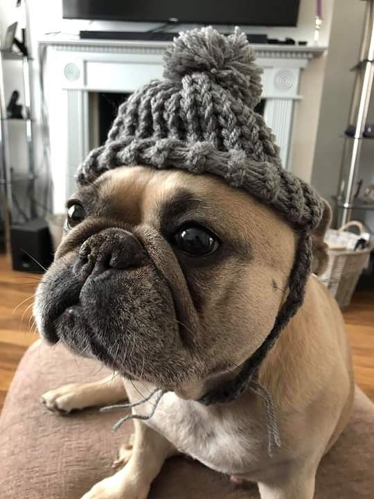 Handmade Knitted Bobble Hat For Dogs Or Any Furbaby S Straps On