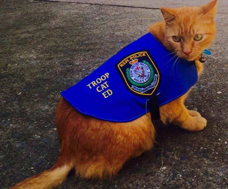Ed The Police Cat Sleeps On The Job Cats And Kittens Cats Cat Sleeping
