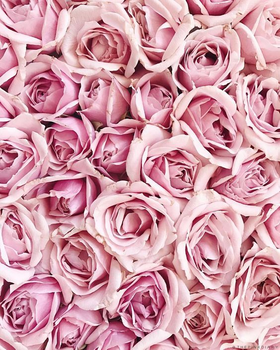 Pink Roses Background, Pink