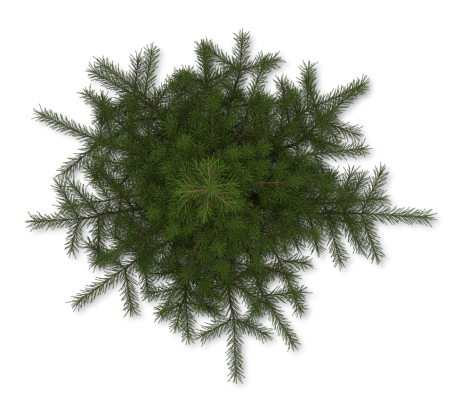 Dundjinni Mapping Software Forums Pine Tree Tree Plan Png Tree Plan Olive Trees Landscape