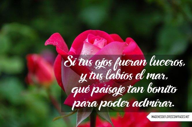 Imagenes De Rosas Con Frases Cortas De Amor Imagenes De Flores Con
