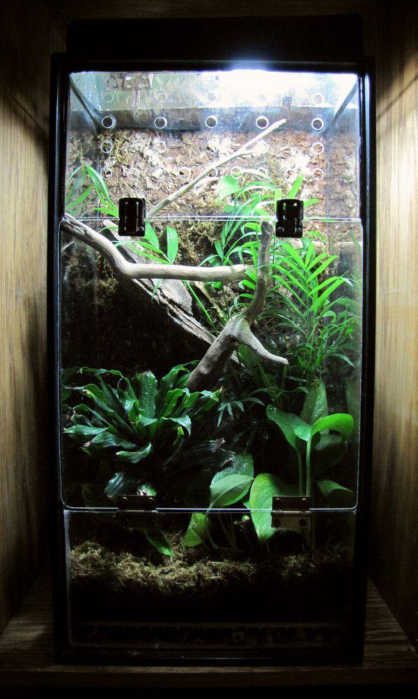 My Diy Crested Gecko Vivarium Gecko Terrarium