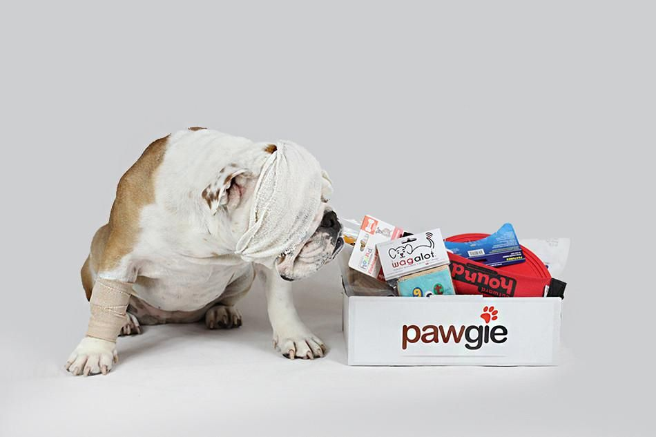 Get Well Pawgie Box Get Well Get Well Gifts Dog Gifts