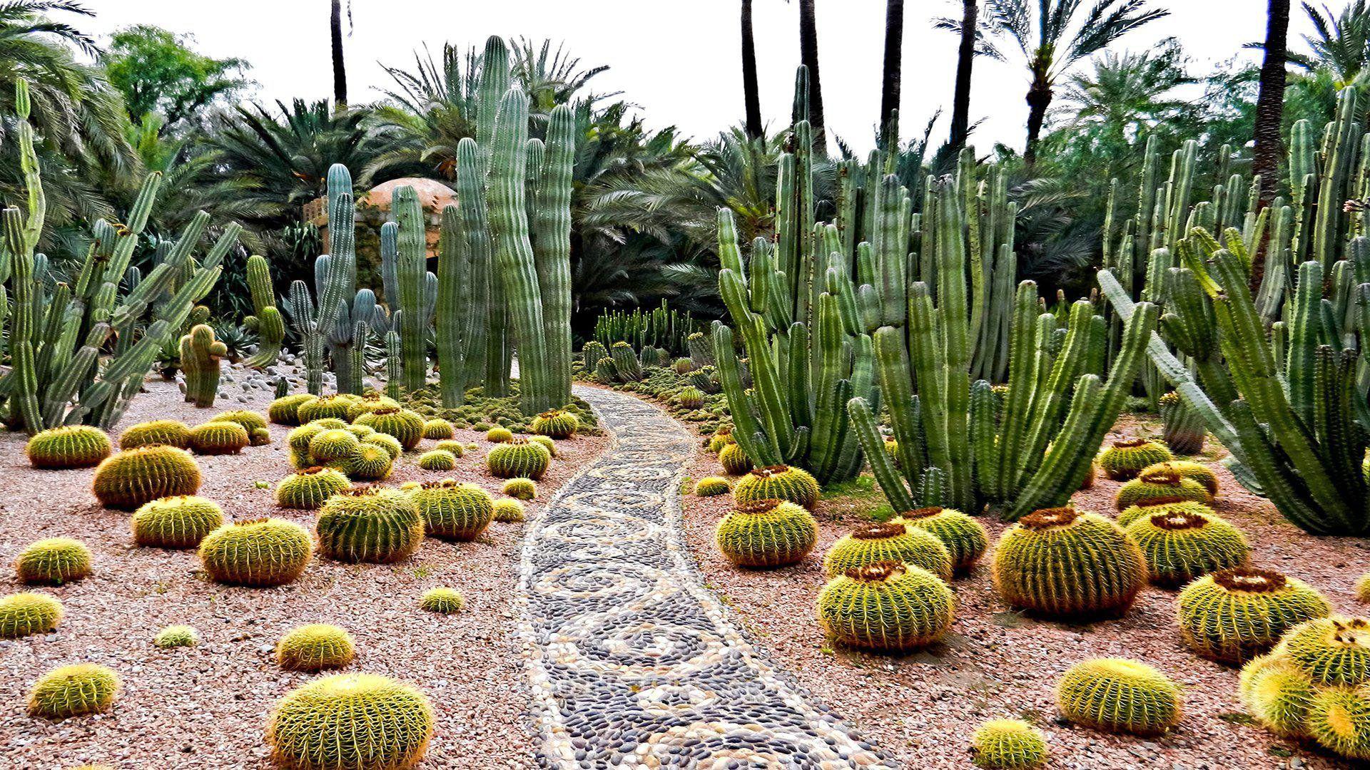 Cactus Garden Marrakech Garden Design Garden 640 x 480