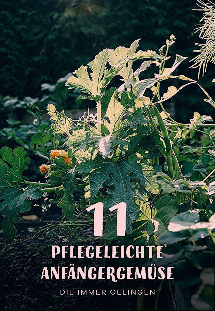 Photo of 11 pflegeleichte Gemüsesorten, die auch Anfängern gelingen – Gartenblog Hauptstadtgarten