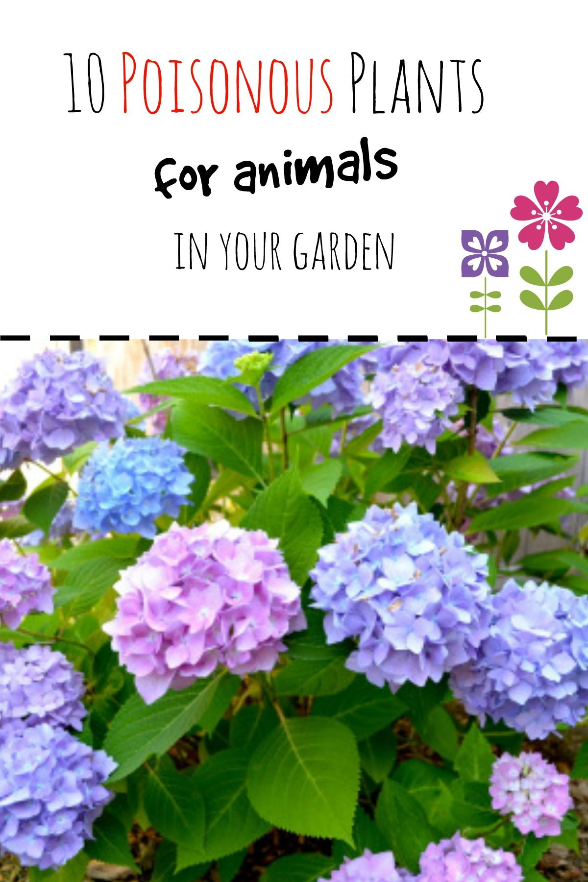 10 Poisonous Plants To Dogs And Cats Plants Hydrangea Planting
