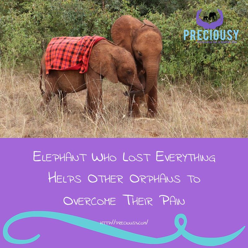 No one understands tragedy quite as well as Mbegu — or the strength that can come from it.  https://www.thedodo.com/elephant-takes-care-orphans-1607451560.html