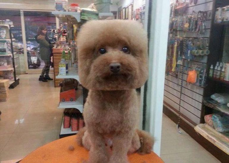The Latest Trend In Taiwan Right Now Is To Give Dogs Round Or